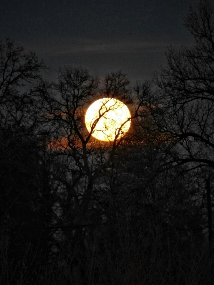 supermoon trees - melanierafferty | ello