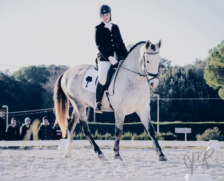 Corleonne - horse, equestrian, dressage - carladome | ello