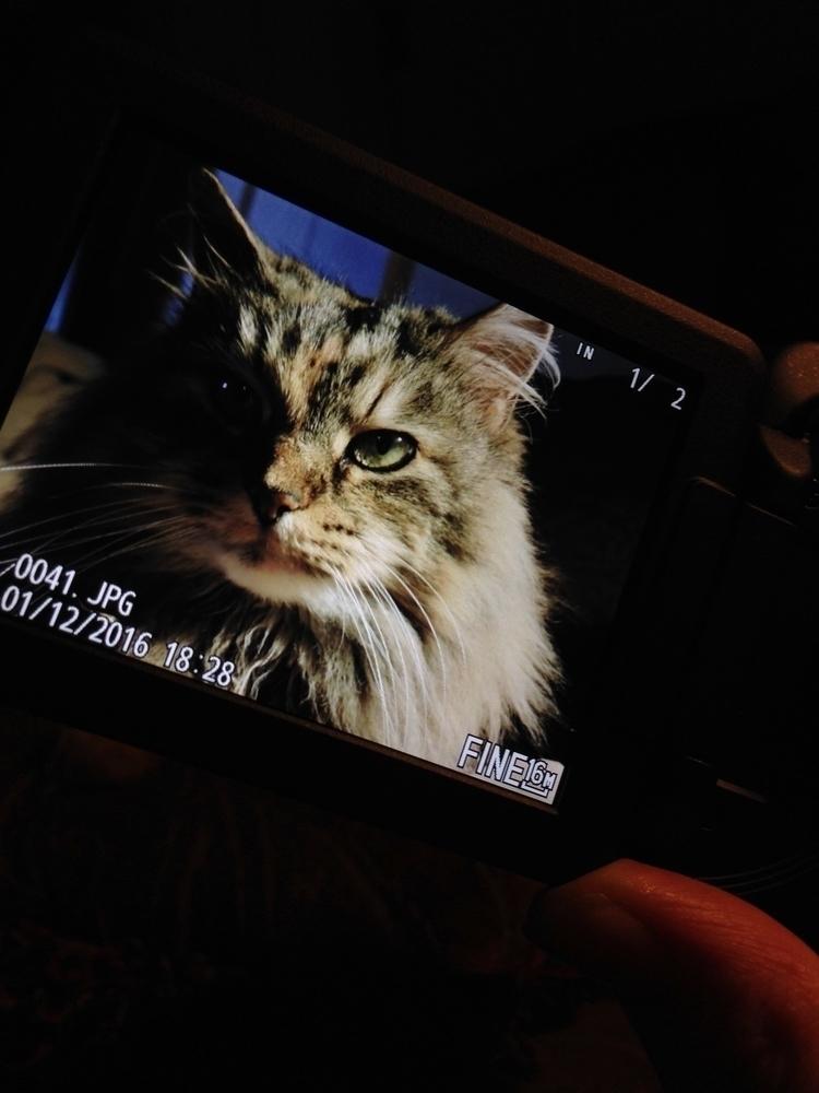 purrrrrfect:cat - katierussell | ello