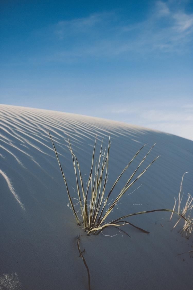 White Sands, NM  - photography, photooftheday - alexlammb | ello