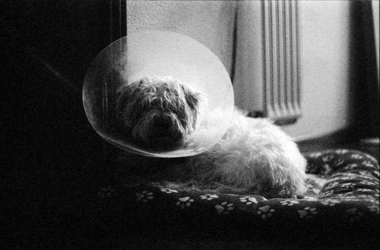 favorite dog - 35mm, blackandwhite - iriacasal | ello