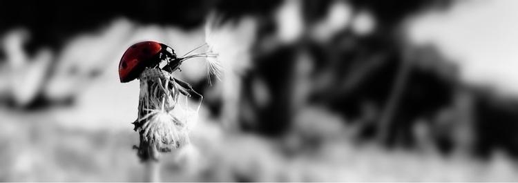 photography, bug, blackandwhite - solis3ardo | ello