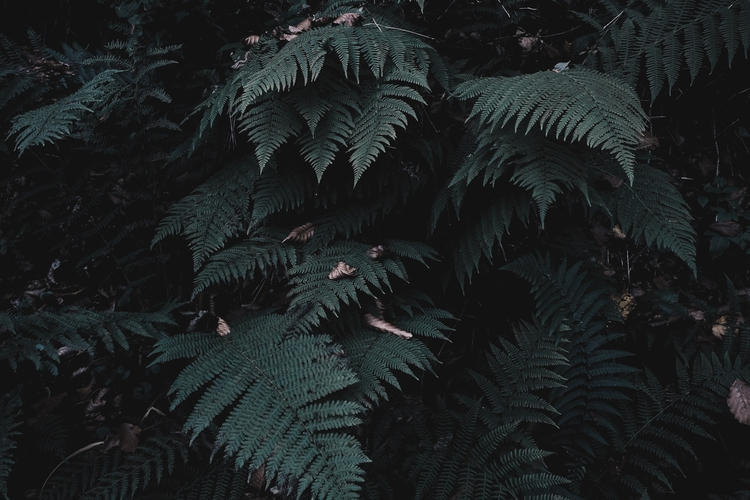 _____ Submitted Design Seeds - nature - blackwyrt | ello