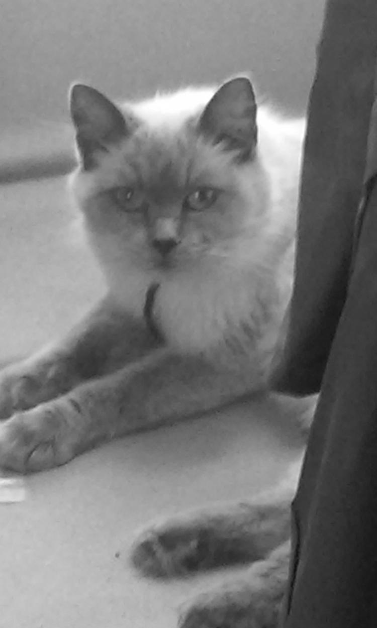 Kat Luna - photography., cat, blackandwhite - kut-n-paste   ello