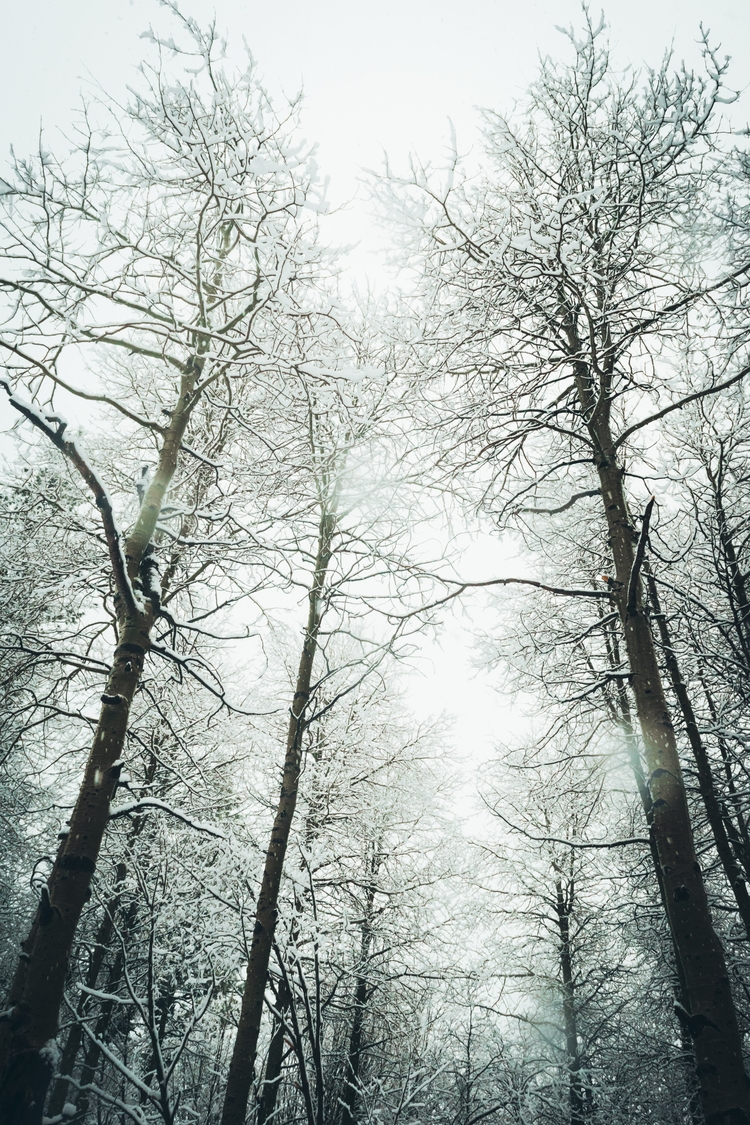 Frozen trapped winter forest. s - brotherkehn | ello