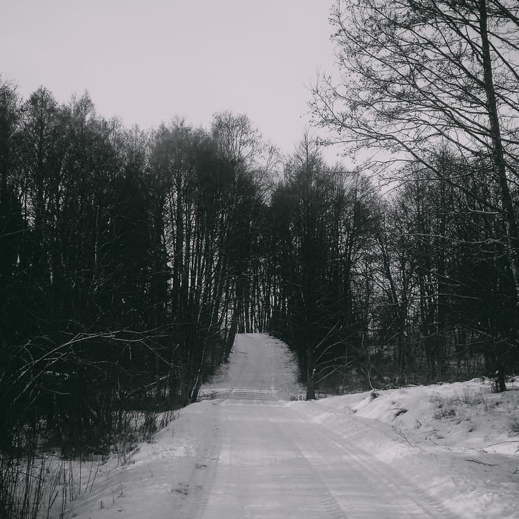 road, trees, dark, darksoul, lithuania - beheroght | ello