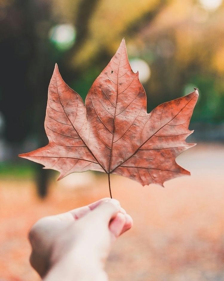 Autumn vibes - sbelver | ello