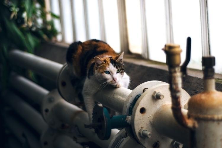 Kitten - sdesilencio | ello