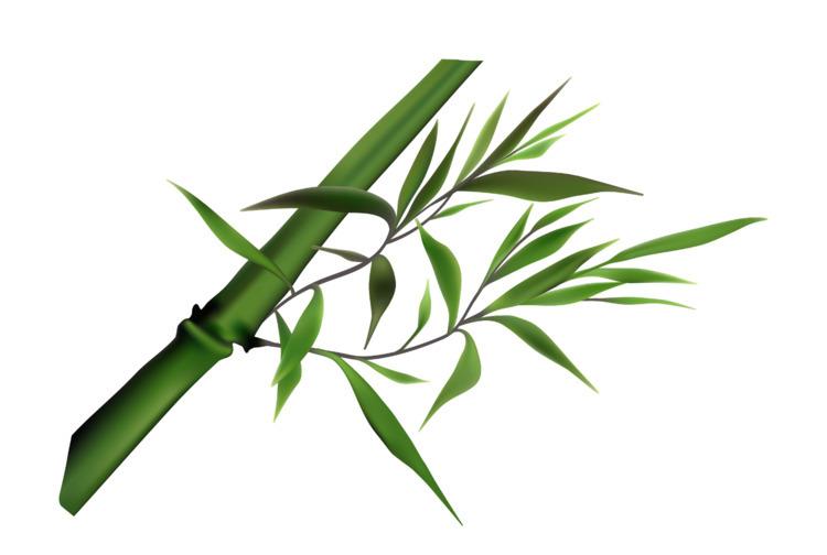 created bamboo illustration 200 - kogakure | ello