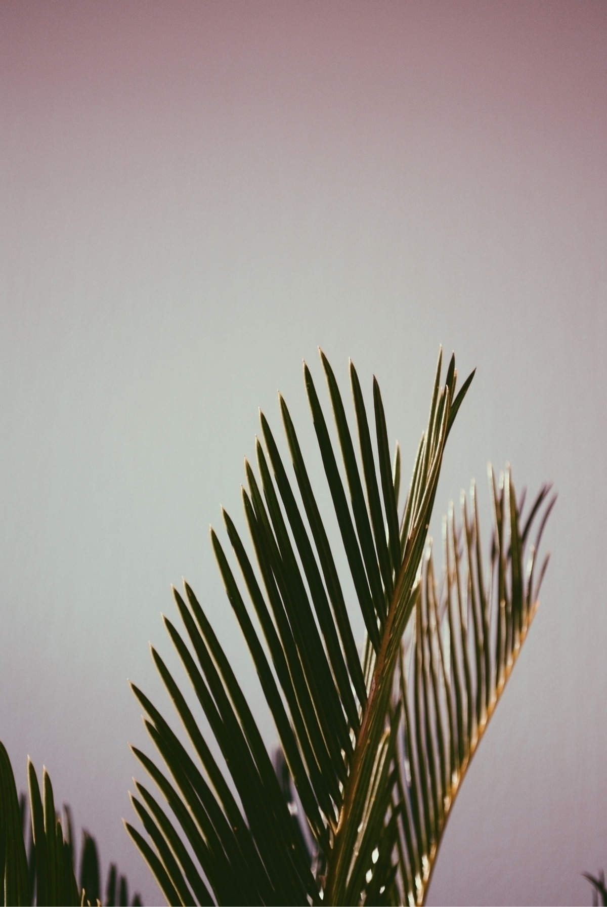 palm trees grow - photography, palms - agzed | ello