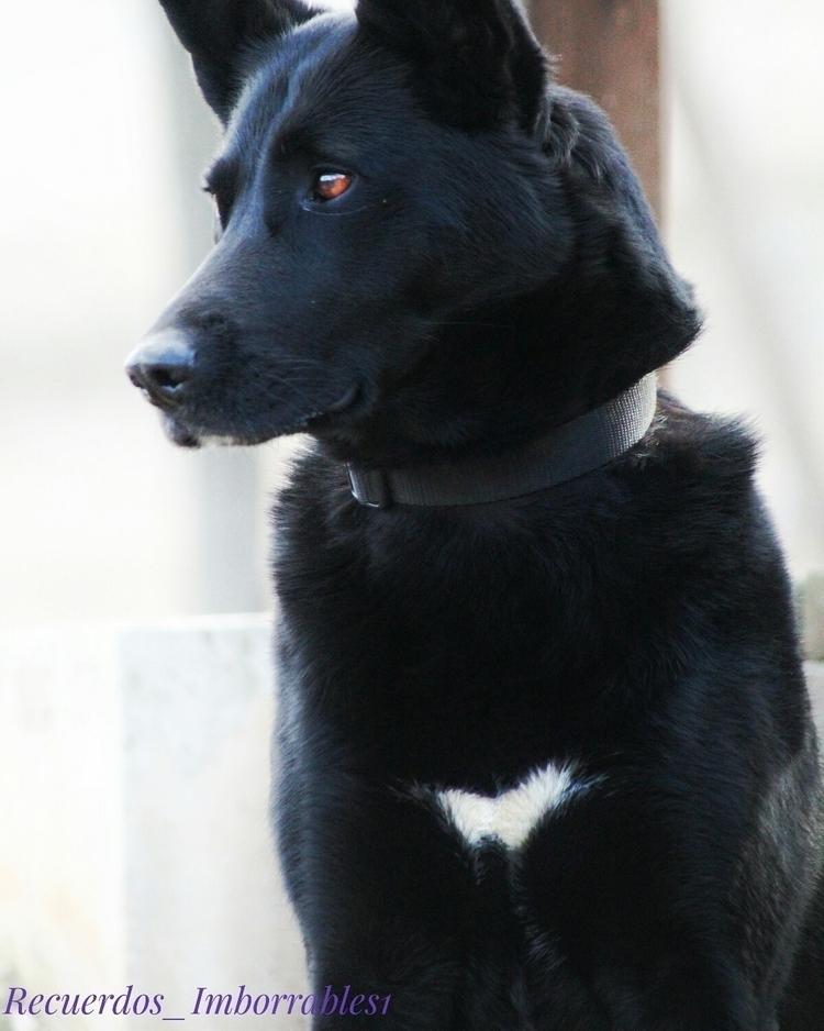 princess - dog, perro, mascota, princesa - recuerdosimborrables1 | ello