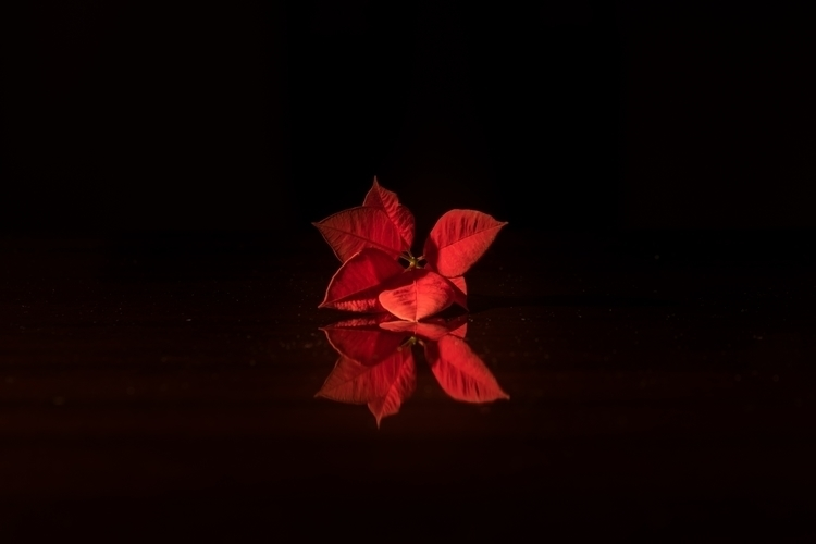 flower, stilllife, photography - pcubo | ello