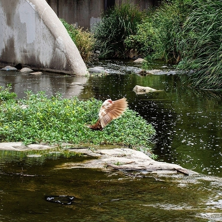 Mallard LA River - textureinspiration - talyo | ello