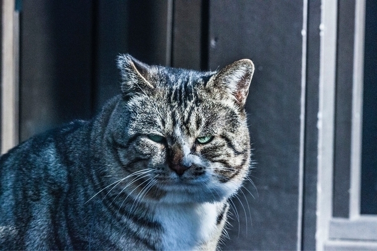 Wild Cat Zoo. thought angry - junwooson | ello