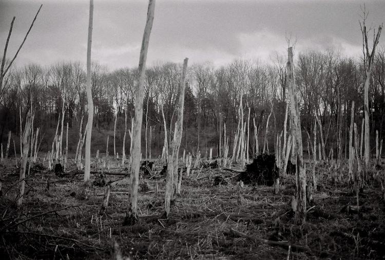 White tree field - 35mm, filmisnotdead - baverill | ello