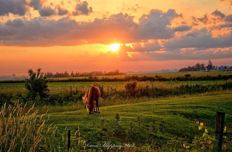 Butler Center Pastures - iowa, Photography - bonfire_photography | ello