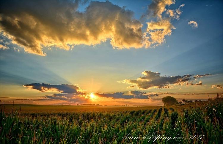 Corn Tassel Sunrise - Photography - bonfire_photography | ello