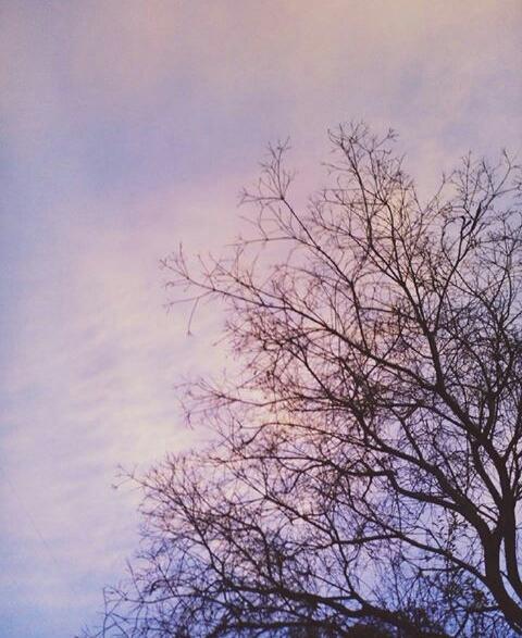 woods - svalentinap | ello