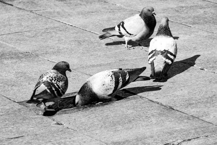 composition - streetphoto, street - lucialopezgal | ello