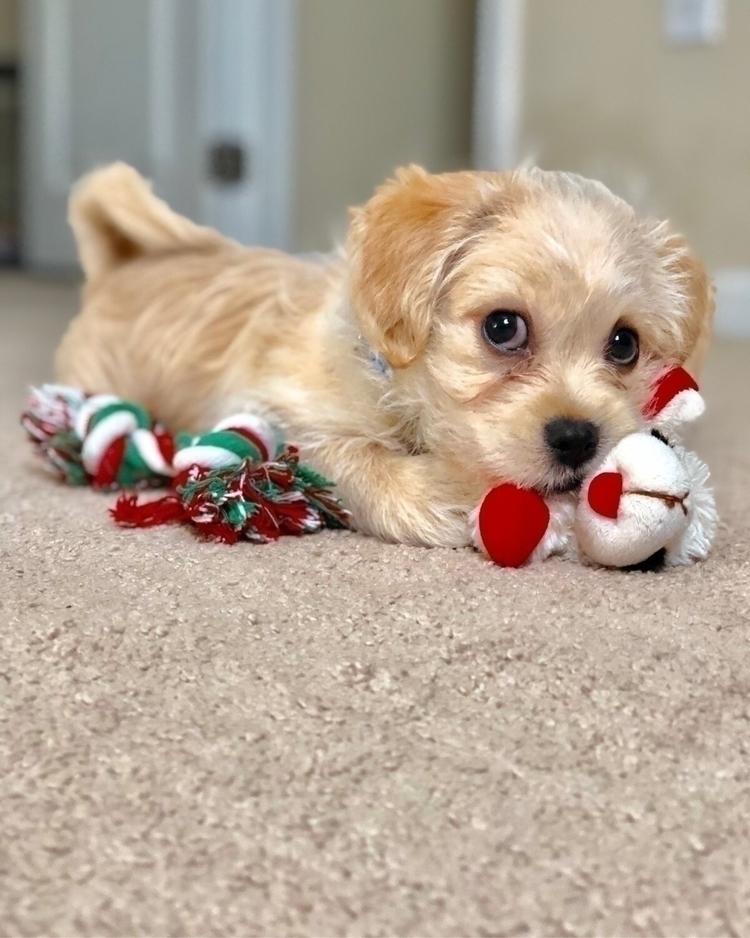 Giuseppe chewing toys - pet, pets - nikonkenny | ello