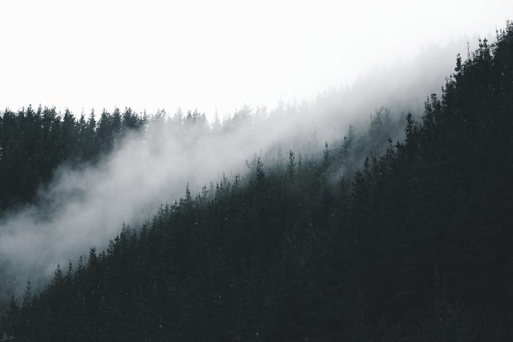 Morning mist. Submitted Design  - leiregoitia_ | ello