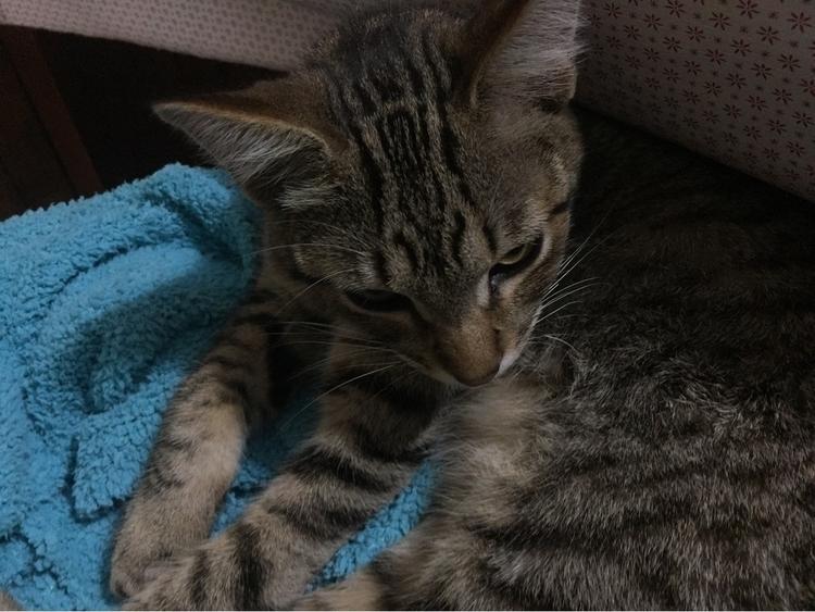 Cats, cats - grumpycat, goaway, crazyman - pallito | ello