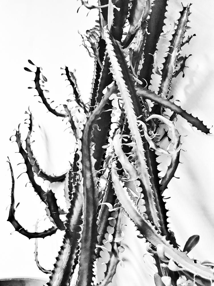 Plant 2 - blackandwhitephotography - borisholtz | ello