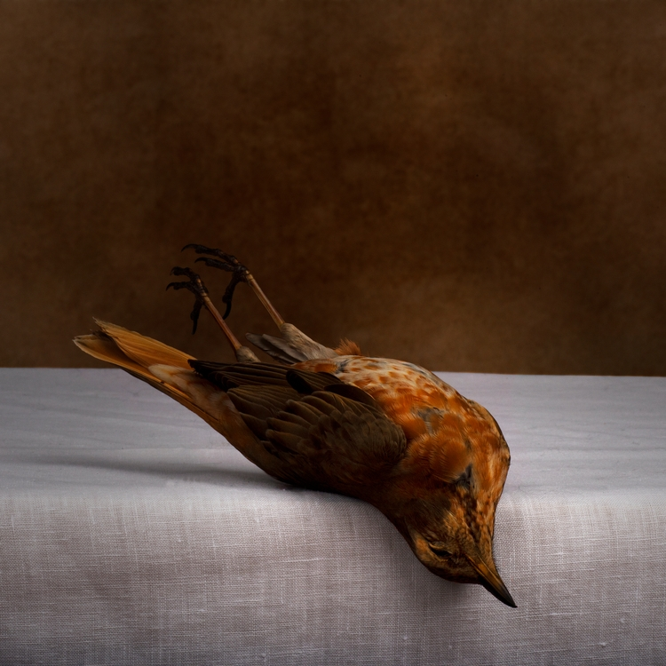 bird, beautiful, dead, death - bespokephoto | ello