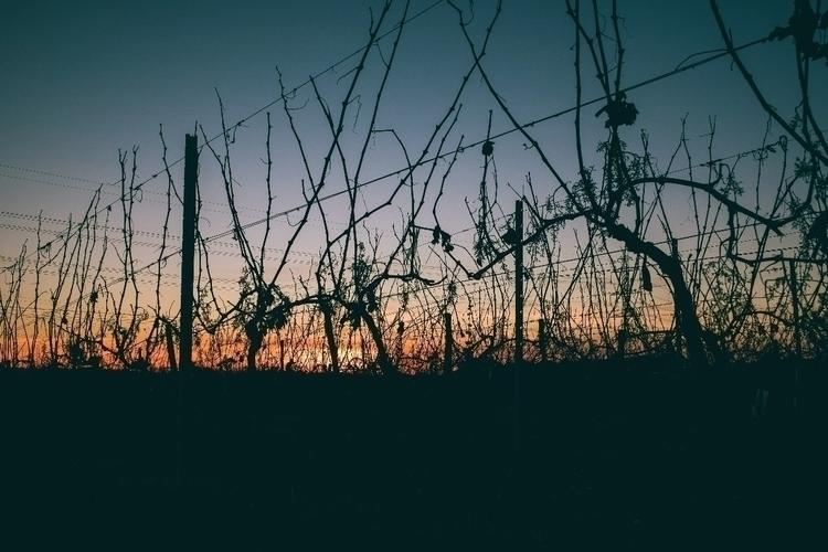 Vineyards - france, bordeaux, vineyards - jdelrivero   ello