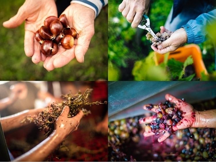 Hands Food Wine group theme  i - heshphoto | ello