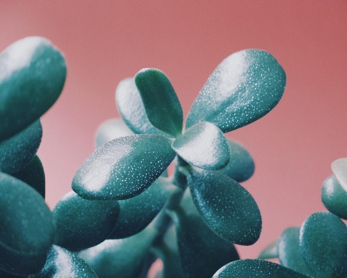 Succulent II - botanical, leaves - andreigrigorev | ello