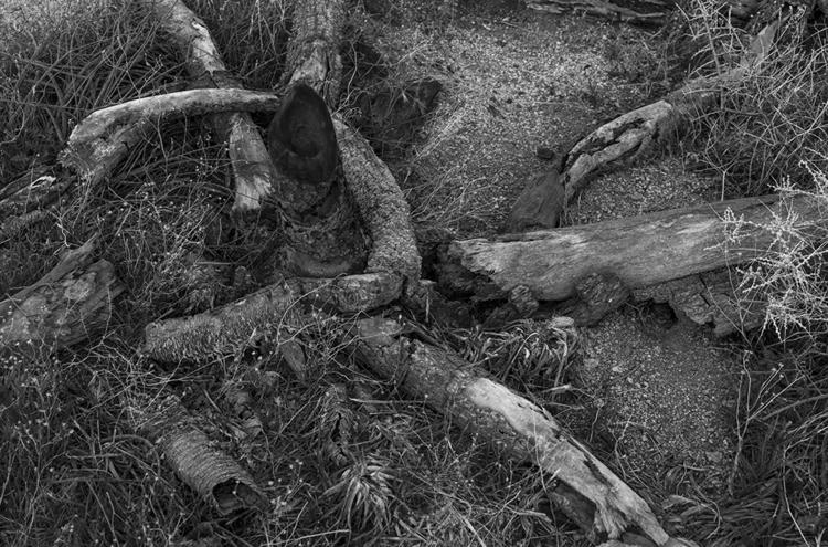 burned, Joshua Tree National Pa - frankfosterphotography | ello