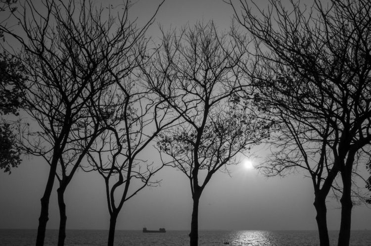 landscape, seascape, trees, sillhouette - lovin2018 | ello