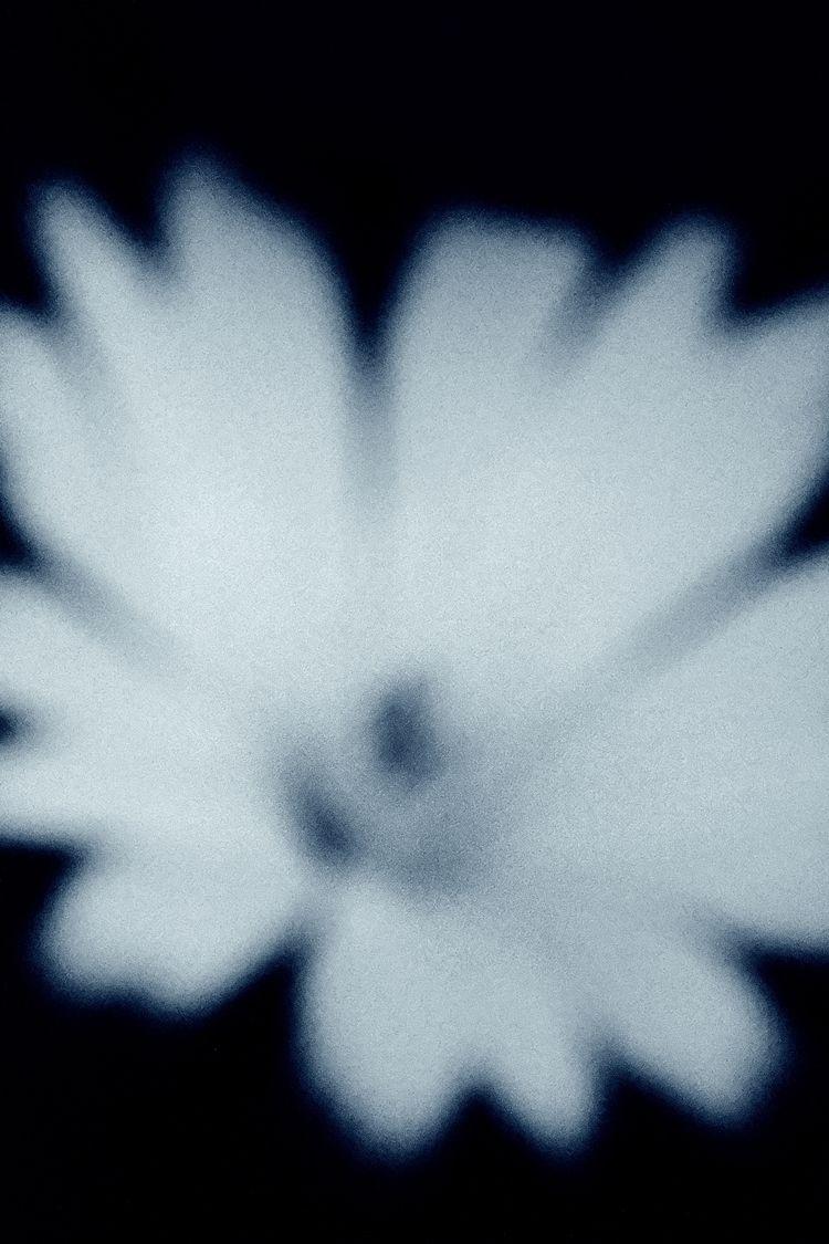 Bloom series. Limited edition p - simonjob | ello