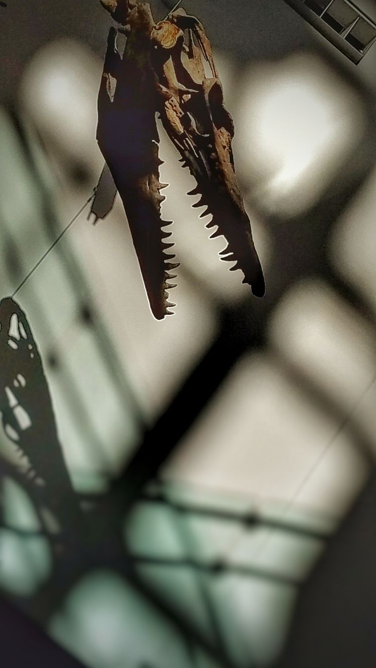 God, eat - dinosaur, scienceMuseum - fotodog | ello