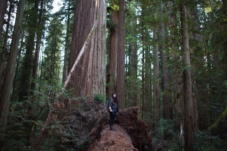darkness eat - california, redwoods - livxlo | ello
