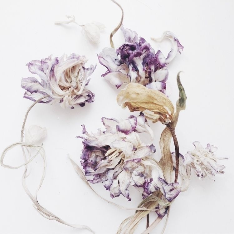 Euphoria Dried tulips pale spri - lilymcfly | ello