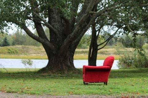 Dreams' Coffee Trees Reality fe - pasitheaanimalibera | ello