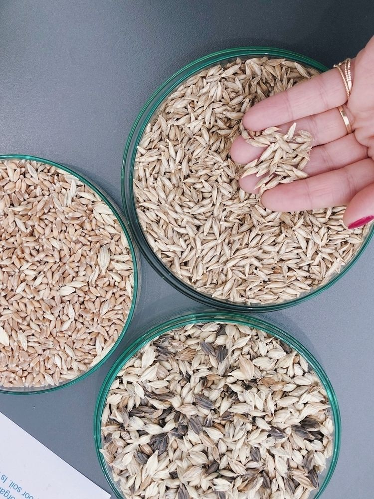 :ear_of_rice:SEEDS LIFE // Orga - nisreenstellakanaan | ello