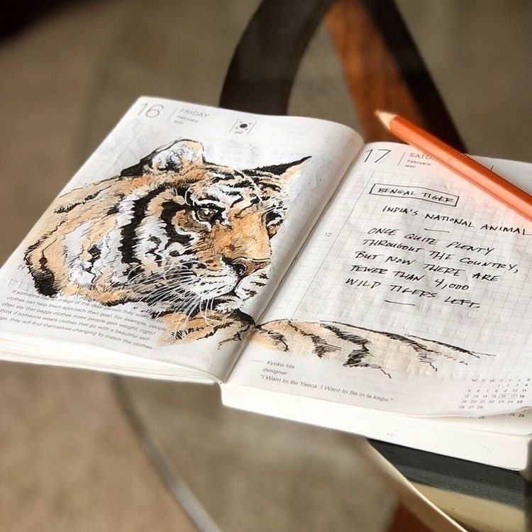 Bengal Tiger sketch Hobonichi T - carsonsamson | ello