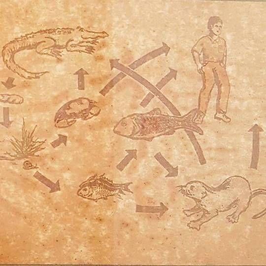 connected shown Ecological Char - vicsimon   ello