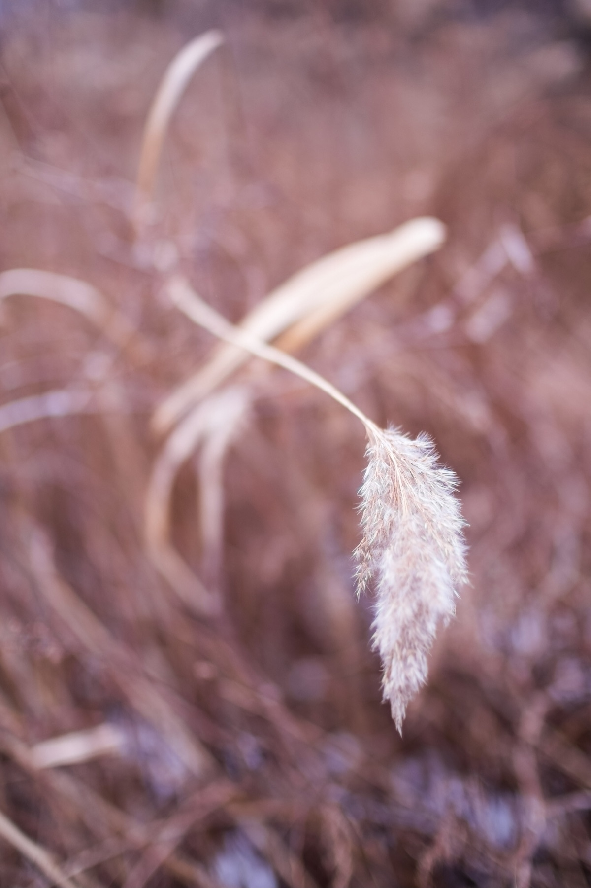 nature, fujifeed, xt20, mitakonzhongyi - ungrammed | ello