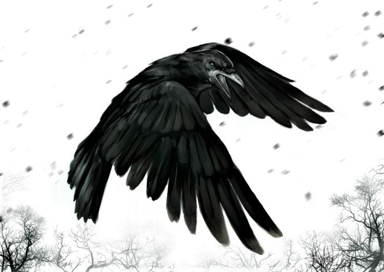 Black Snow crow lies wings land - pasitheaanimalibera | ello