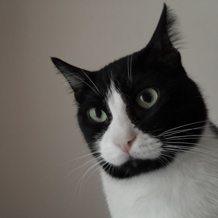 Bruce Cat Black Cats Tower - brandietan | ello