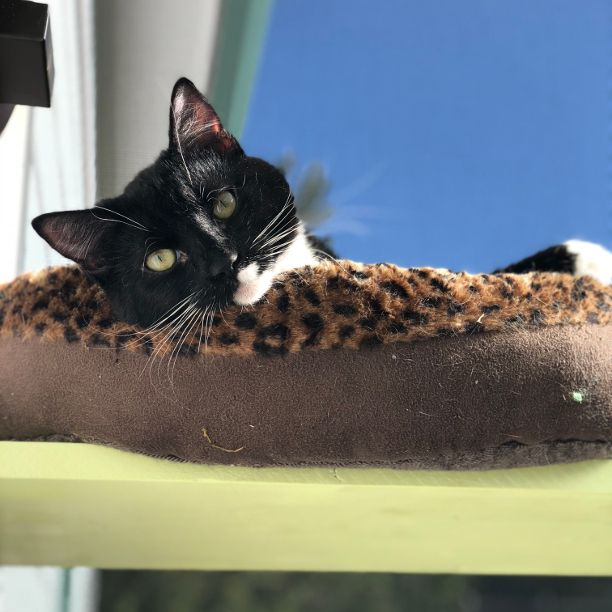 COMMENT SHARE Meet: Mittens, Sp - snapcats | ello