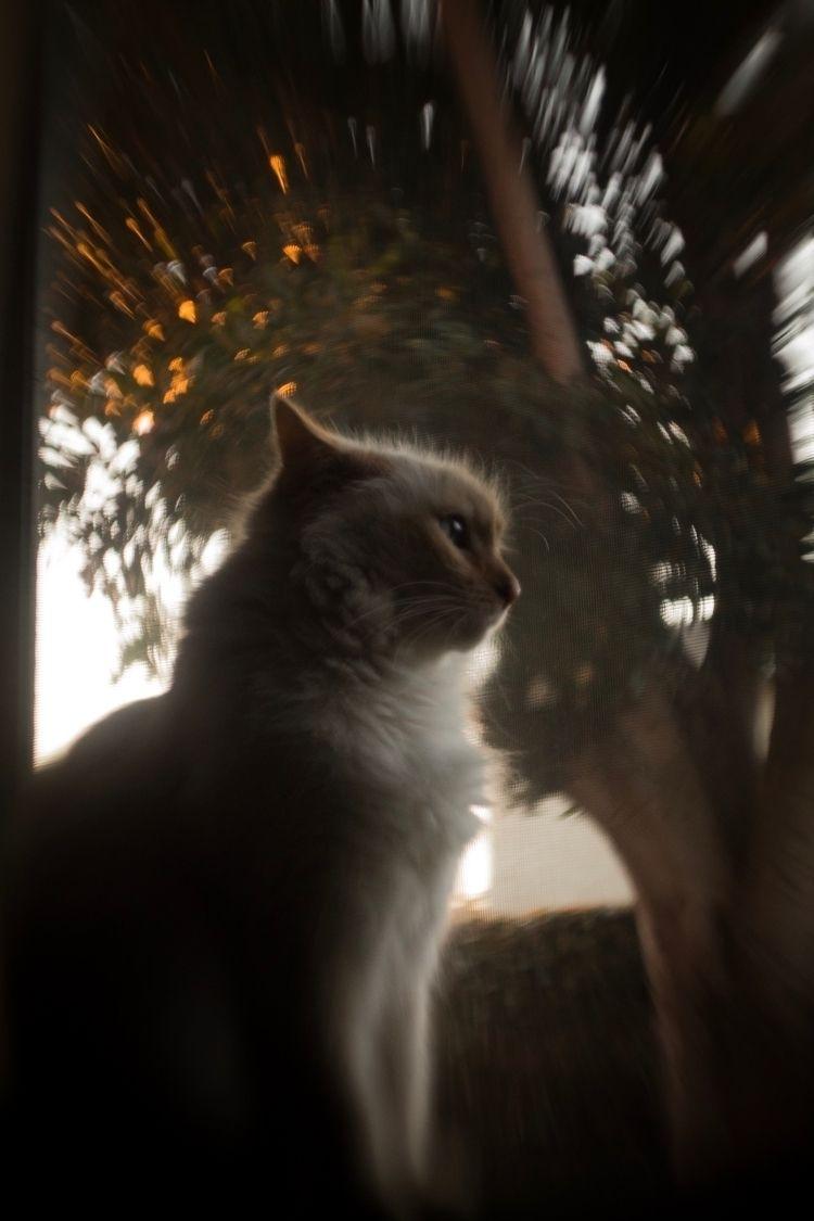 Regal photo cat. thinking profi - thewhetherman | ello
