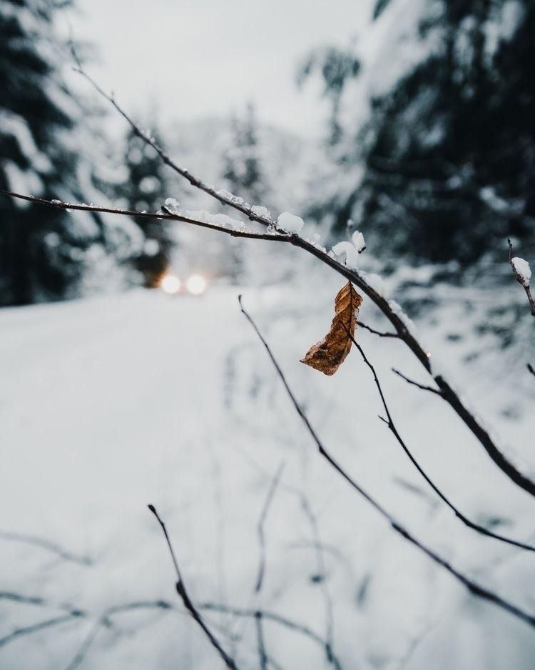 Winter arrived - shatsky | ello