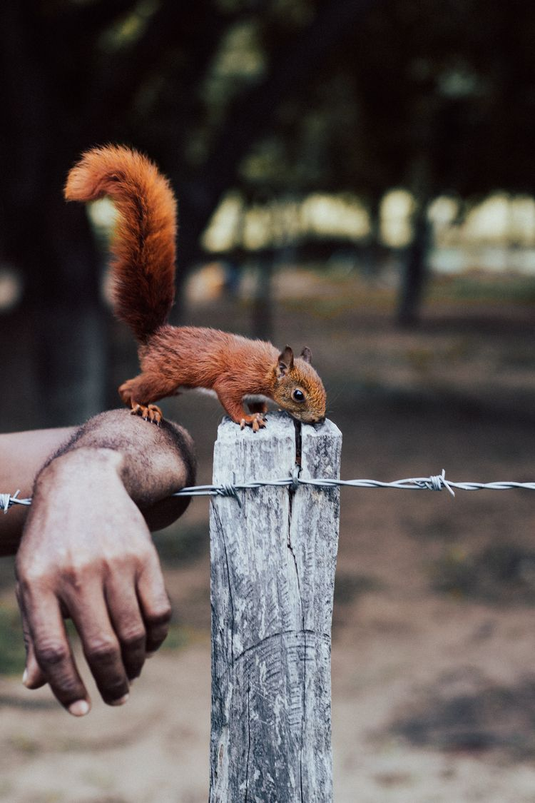 Curious Squirrel - squirrel, hand - sergiocorzo | ello