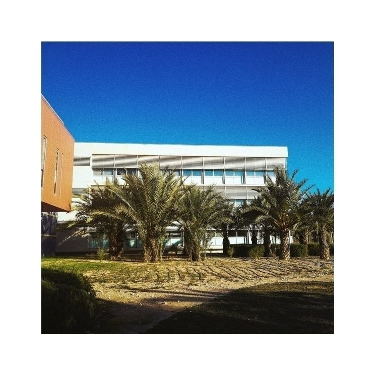 University:palm_tree::office - university - ralx | ello