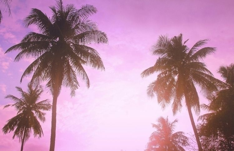 Palm Realm - andy_digitalnomad | ello